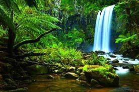 Our Medicinal Connections With Rainforests